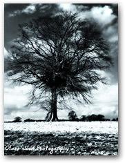 Atom Tree