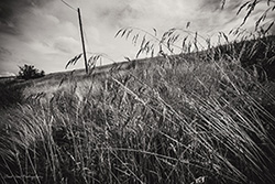the long grass