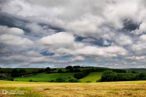 Wincle fields