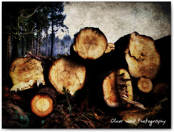 Macclesfield Logs