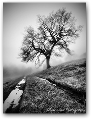 Prestbury Tree