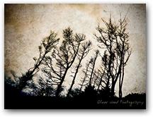 Shutlingsloe Trees