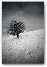 Reclining Tree, Prestbury, Cheshire