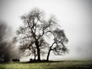 prestbury mist