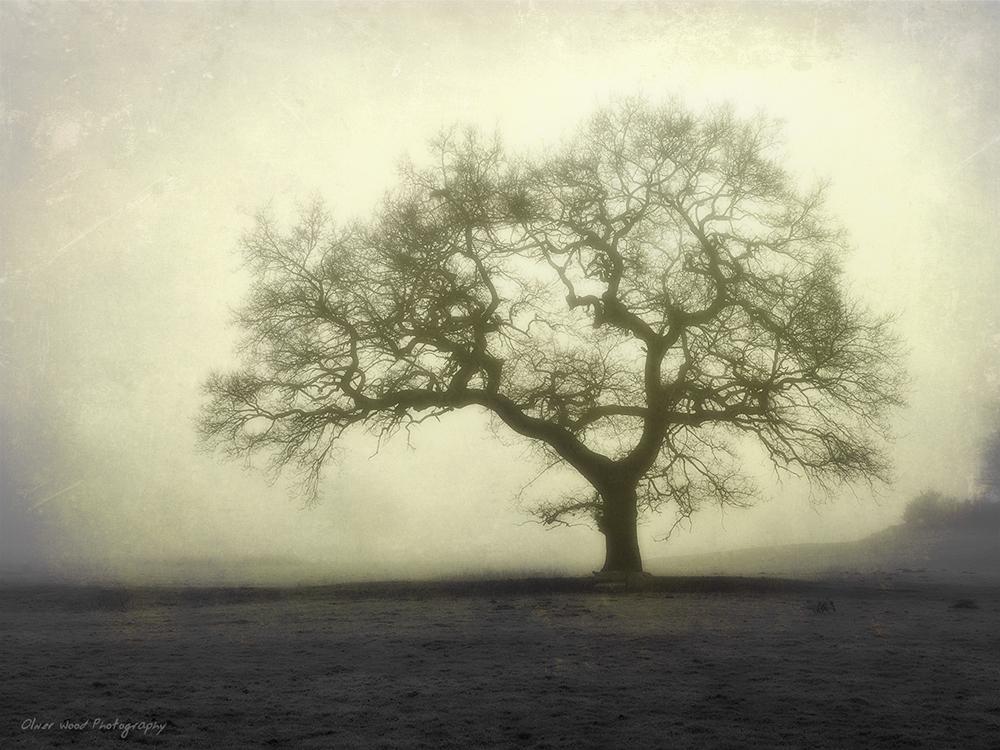 misty morning prestbury