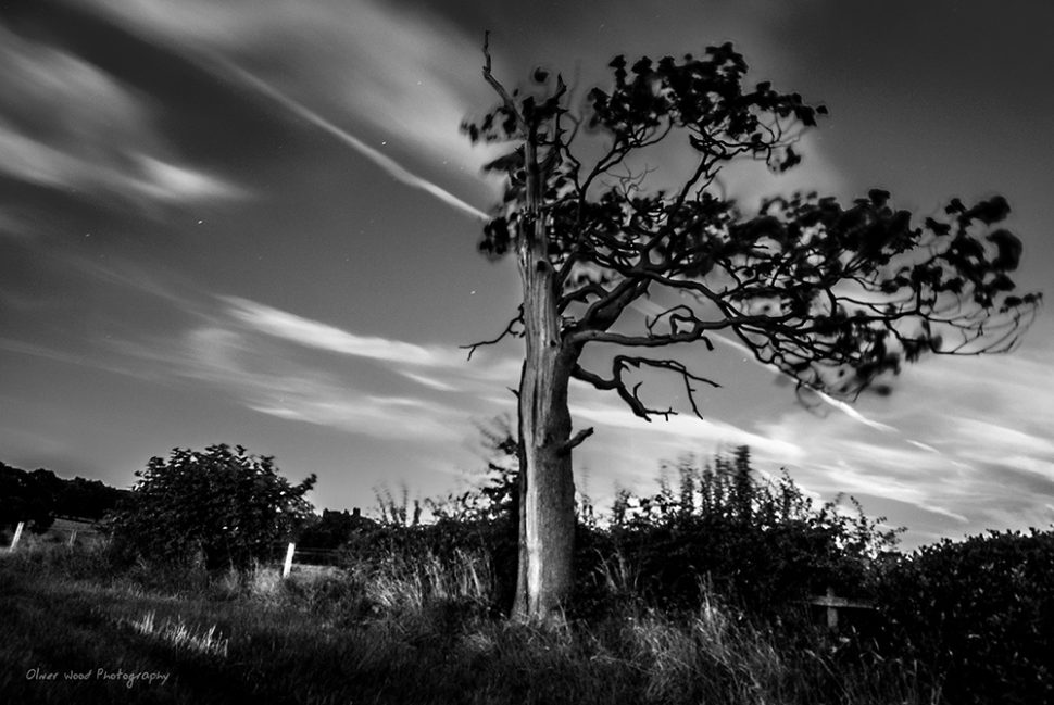 Lightning Tree Prestbury