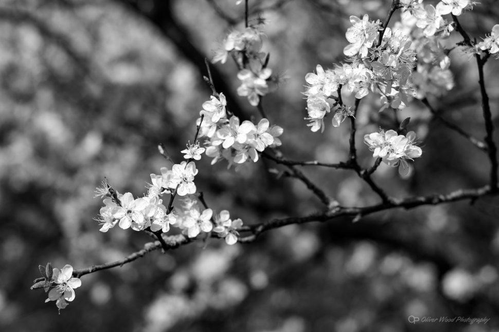 Blossom Mono