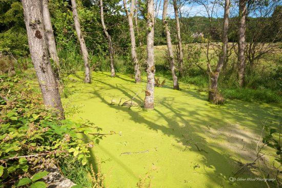 kerridge pond 2