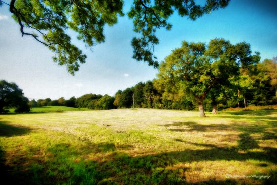 Prestbury field