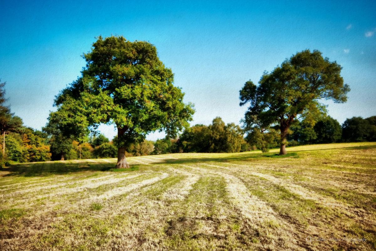 Prestbury fields 2