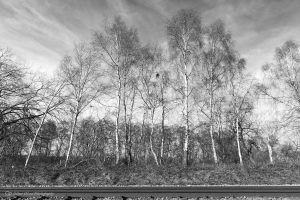 plumley tracks